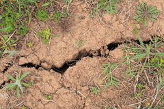 Crack in dry lawn Stock Image