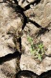Crack ground Stock Photos