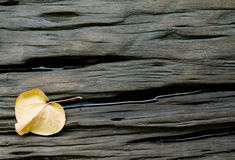 Crack hard wood with dried leaf background Royalty Free Stock Photography