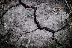 The crack land. From the sun and dry weather Royalty Free Stock Image