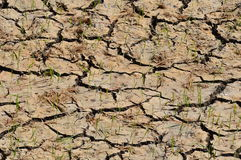 Crack paddy field in dry season Royalty Free Stock Photos