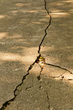 Crack in pavement. The  Crack of the road Royalty Free Stock Photography