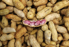 A crack peanut on the top of pile of peanuts Stock Photography