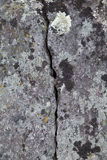 Crack in Rock. With Moss and Fungus on it Stock Images