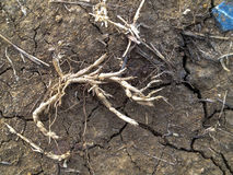 Crack soil on dry season Royalty Free Stock Image