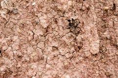 Crack soil on dry season, Effect of Global worming Stock Image