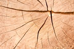 Crack on the teak textures Stock Photos