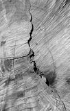 Crack in tree Stock Images
