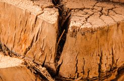 Crack In The Tree Trunk Close-Up royalty free stock photography
