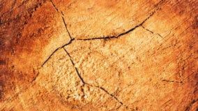 Crack wood grain. Stock Photos