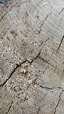 Crack wood texture. Abstract texture. Wallpaper Royalty Free Stock Image