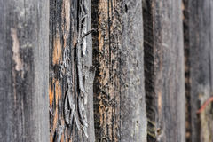 Cracked aged wooden boards Royalty Free Stock Photo