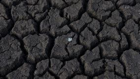 Cracked, arid soil damaged by drought, with one small plant growing. Background horizontal shot of farmland damaged by drought, raising major environmental Stock Images