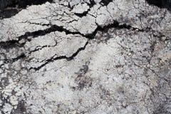 cracked asfalt Arkivfoton