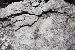Cracked asphalt Stock Photos