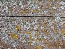 Cracked balk. Cracked wooden balk with lichen spots Stock Image