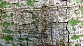 A cracked bark with a clear texture royalty free stock image