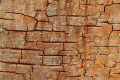 Cracked Bark Stock Photography