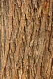 Cracked Bark Stock Photos