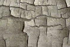 Cracked bark detail Royalty Free Stock Photo
