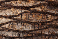 Cracked bark of old palm trees Stock Image