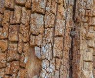 Cracked bark pattern royalty free stock photo