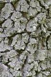Cracked bark Royalty Free Stock Photography