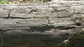 Cracked bark on a tree trunk stock video footage
