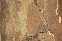 Cracked bark. Wood texture. Autumn abstract background. Soft focus. royalty free stock image