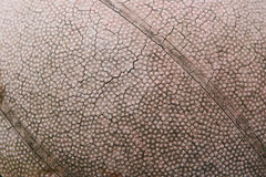 Cracked Basketball. An old basketball with numerous cracks in the leather exterior caused by prolonged exposure to the sun and heat Royalty Free Stock Images