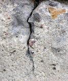 cracked betong Arkivfoton