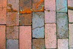 Cracked bricks. Close up of cracked bricks on sidewalk Royalty Free Stock Photos