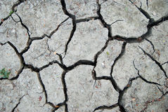 Cracked clay ground into the dry season Stock Image