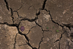 Cracked clay ground into the dry season. Royalty Free Stock Photography