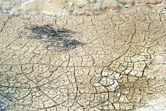 Cracked clay ground into the dry season Stock Photography