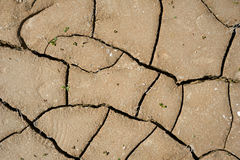 Cracked clay ground with small green leafs Royalty Free Stock Photo