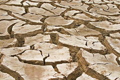Free Cracked Clay Soil Background Royalty Free Stock Images - 12498989
