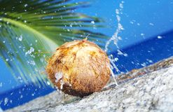 Cracked Coconut Stock Photography