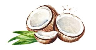 Cracked coconut with green leaves. Watercolor hand drawn illustration, isolated on white background. Cracked coconut with green leaves. Watercolor hand drawn stock illustration