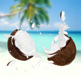 Cracked Coconut with milk splash Stock Photography