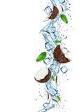 Cracked coconut splash Stock Images