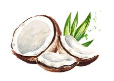 Cracked coconut. Watercolor hand drawn illustration, isolated on white background. Cracked coconut. Watercolor hand drawn illustration, isolated on white royalty free illustration