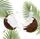 Cracked coconuts on white background Royalty Free Stock Photo