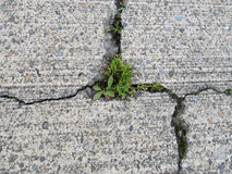 Cracked Concrete, degraded with a weeds growing through. The cracks stock images