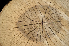 Cracked cut surface of a tree trunk. Detail of the cracked cut surface of a newly sawed tree trunk Royalty Free Stock Photography