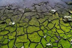 Cracked dead soil Stock Images