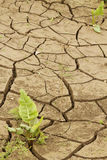 Cracked  desert  soil Stock Photography