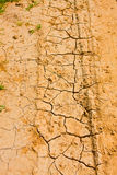 Cracked desert soil with grass sprouts Stock Photography