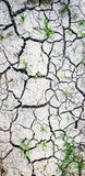 Cracked dirt texture. With green grass royalty free stock photos