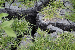 Cracked Dried Gray Mud With Green Grass Stock Photography